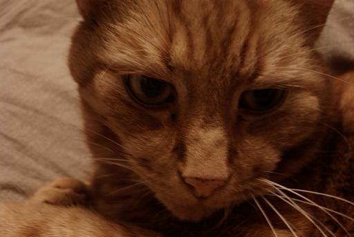 katten Minouch
